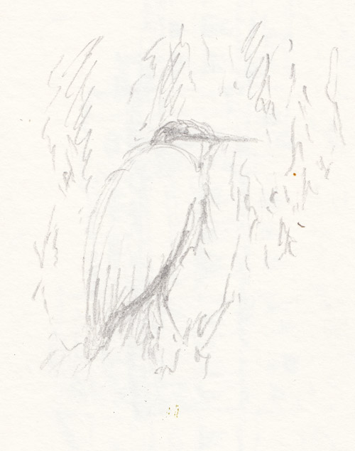 Heron on the buckingham palace lakes island, sketch by keith pettit