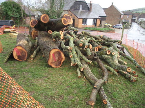 Alfriston Elm felled